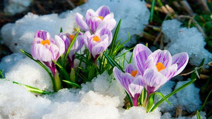 В 2021 году весна наступит раньше | Информационное агентство
